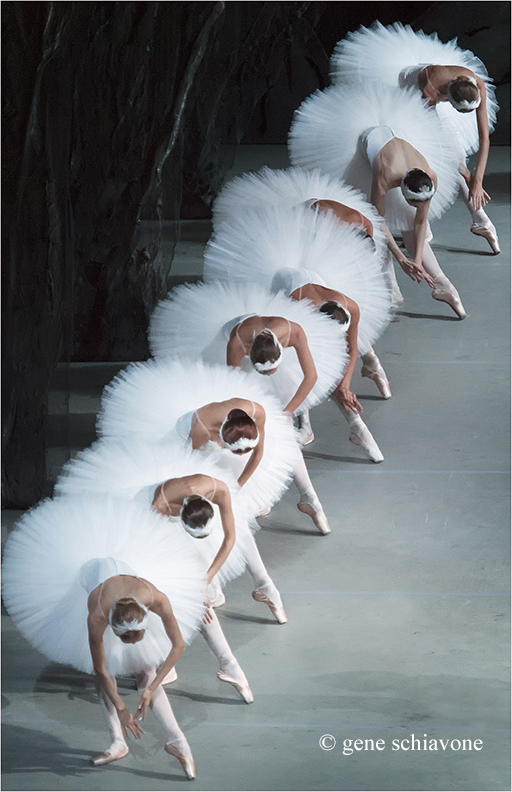 2. Gene Schiavone, The Swans of the Mariinsky Theater